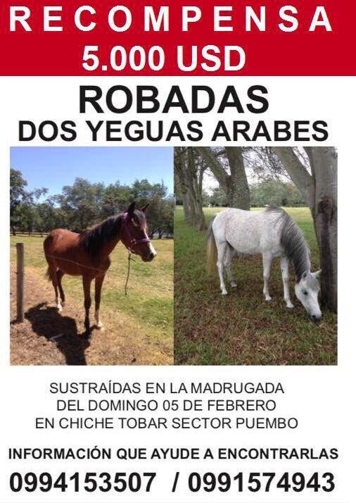 #caballos robados #Quito #Ecuador #Pichincha #amigos #caballistas #chagra #cabalgata #acaballoecuador #ladrones #recompensa  #valle #puembo<br>http://pic.twitter.com/kk2COyhAzo