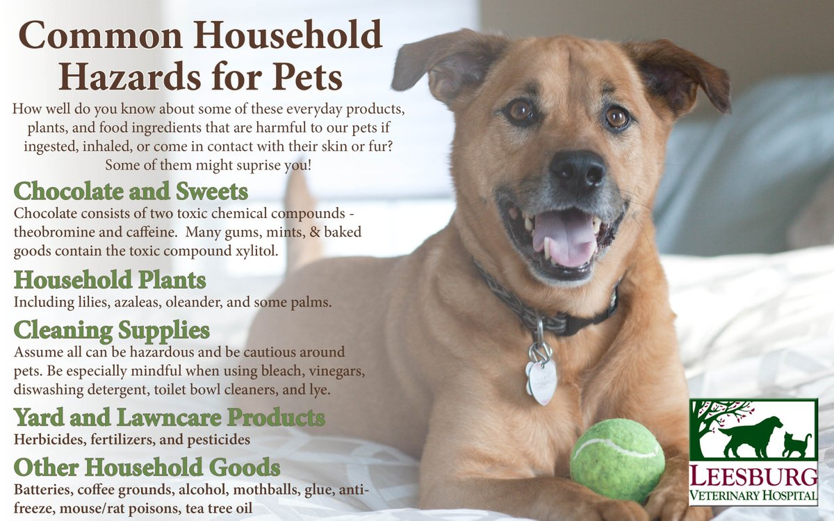 National Animal Poison Prevention Week.  https://www. thekennelclub.org.uk/media/605397/p oisons.pdf &nbsp; …  #pets #care<br>http://pic.twitter.com/IncUgCR8HE