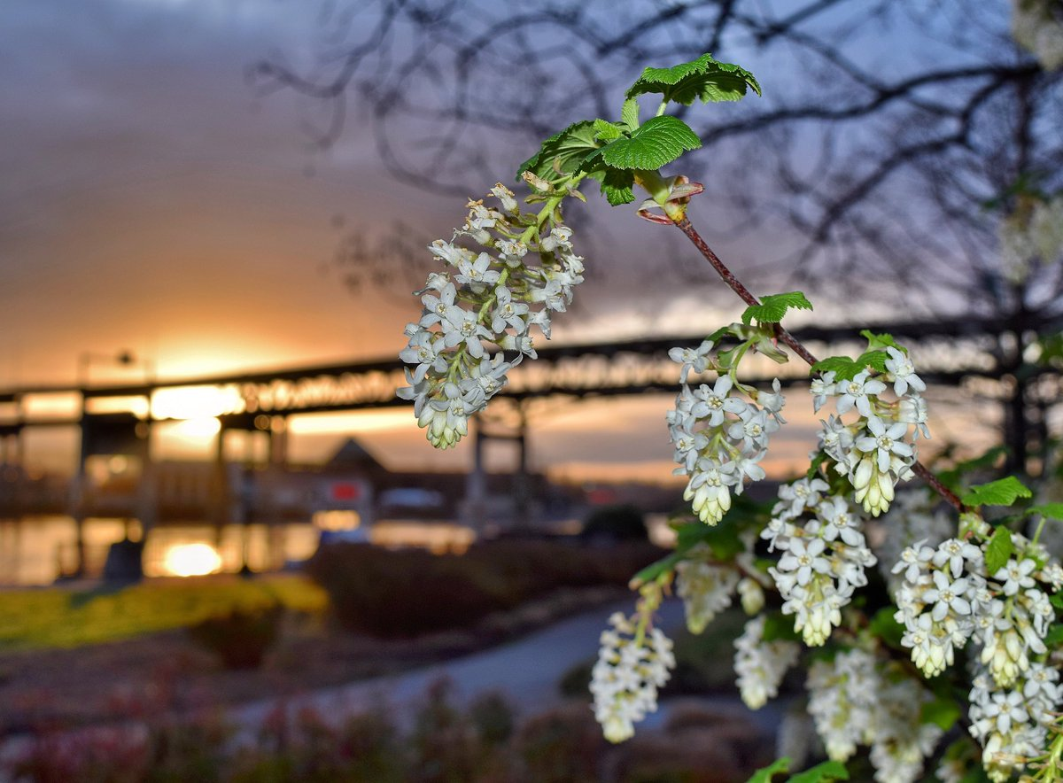 ICYMI: I got a cool shot of a gorgeous spring sunrise this morning from Portland&#39;s South Waterfront #LiveOnK2 #k2spring #pdxtst <br>http://pic.twitter.com/QkPVW8LEhf