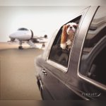 On #NationalPuppyDay, like every other day, our Owners' pets are treated like royalty. #PetsOnJets