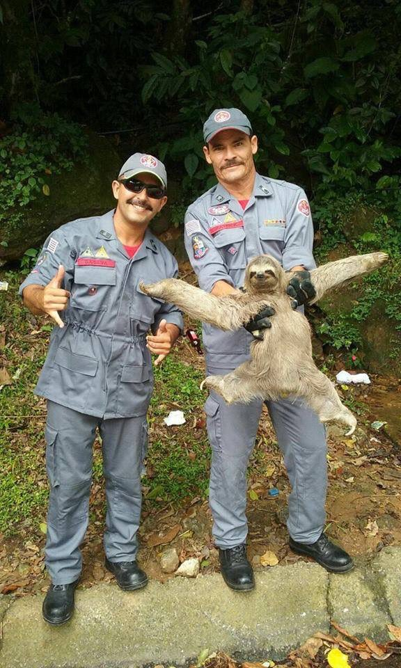 RT @fatgirlphd: High point of my week: this photo of a sloth getting rescued and being fabulous 💃 https://t.co/faeNntvSdz