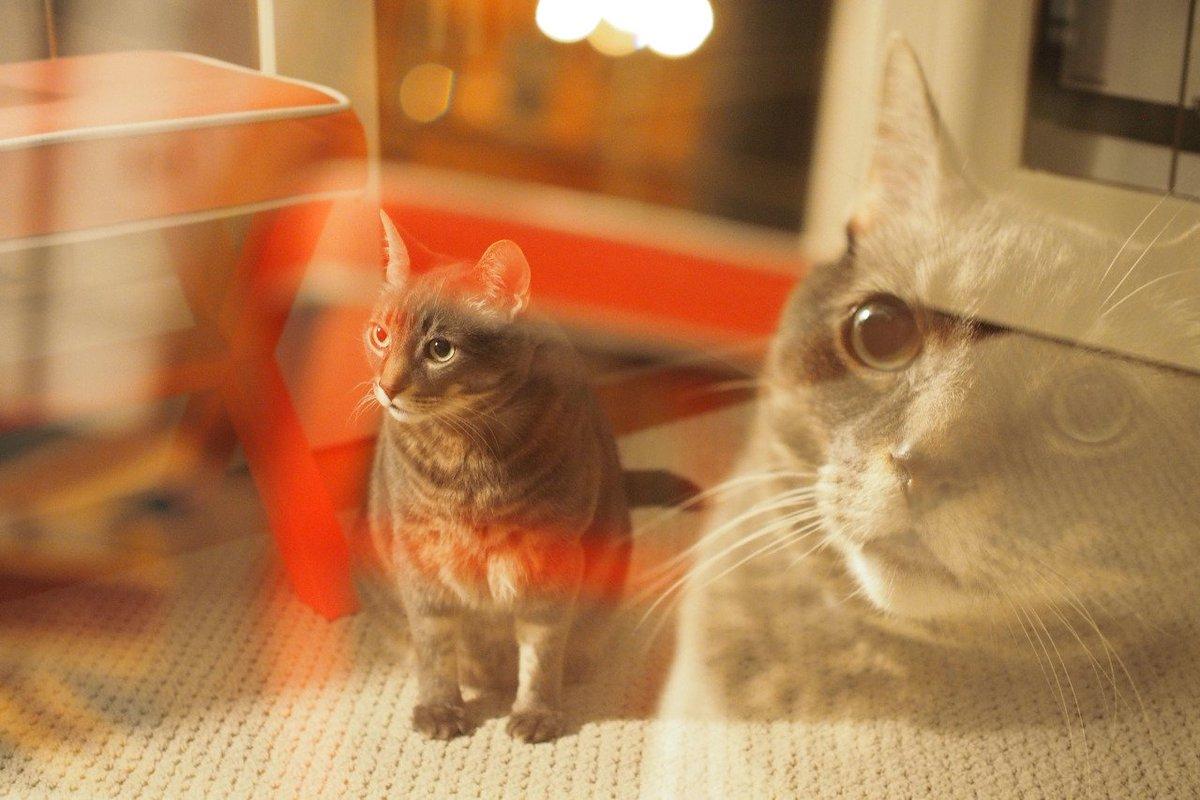 when ur cat sees you brick a fit https://t.co/iApHg3LkmS