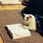 こたつから半身出てたので辞書を添えてみた pic.twitter.com/veOdqPhvLX