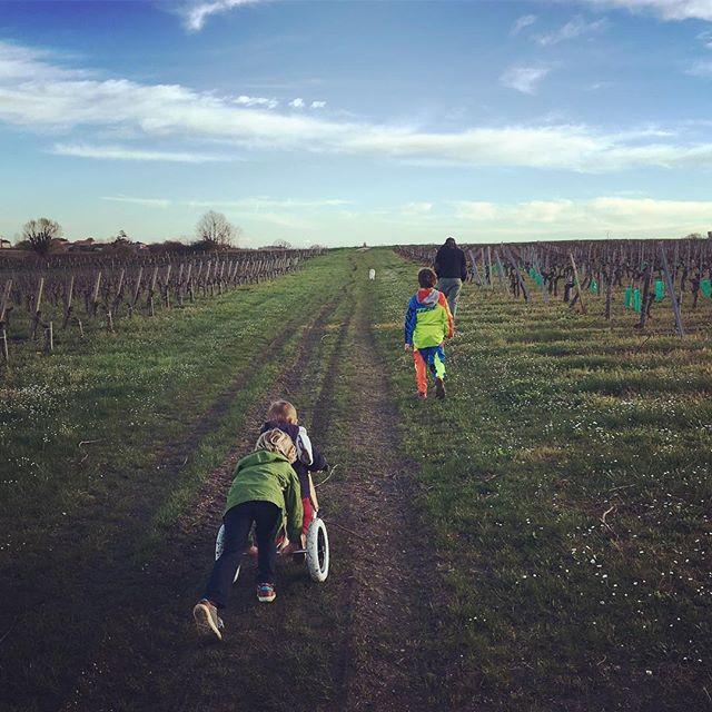 Balade au coeur des vignes ensoleillées du Château Haut Bourcier #vinblaye #blayecotesdebordeaux #winelover #vignobles #sun : @hautbourcier<br>http://pic.twitter.com/34dIIxP9K0