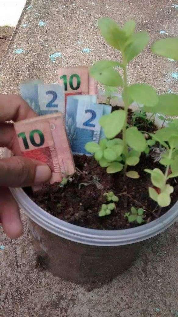 #ORuimDeSerPobreÉ ter que ficar plantando agora, para colher só depois...