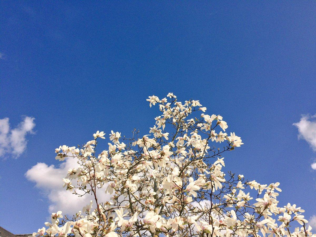 #Nantes il est de retour, enfin ... #sun #magnolia<br>http://pic.twitter.com/Mqd0YPXkKf