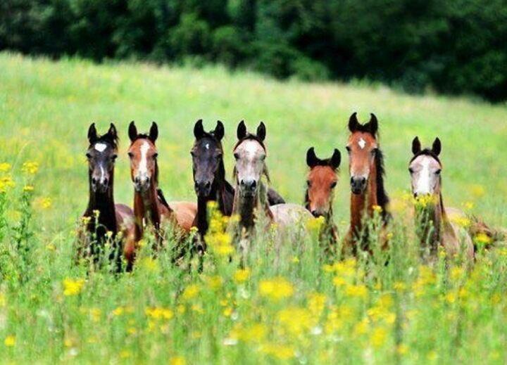 Quien dijo #findesemana ?   Listos para una #cabalgata con #amigos #Familia    #Ecuador #family #caballo #paseo #acaballoecuador #montaña<br>http://pic.twitter.com/Dq1wash7Y1