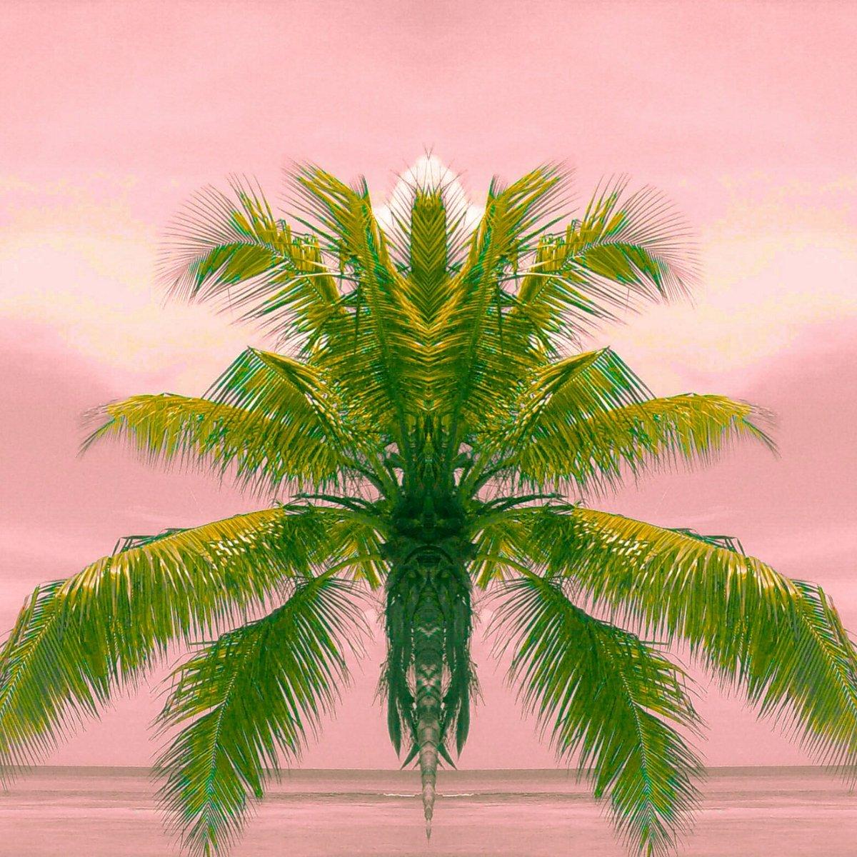 #bonweekend je rêve d&#39;être sous un #palmier sans querelle #politique #sociale #religieuse sous le #soleil #sun #avecunverrederose #zen<br>http://pic.twitter.com/LUuncgDGdp