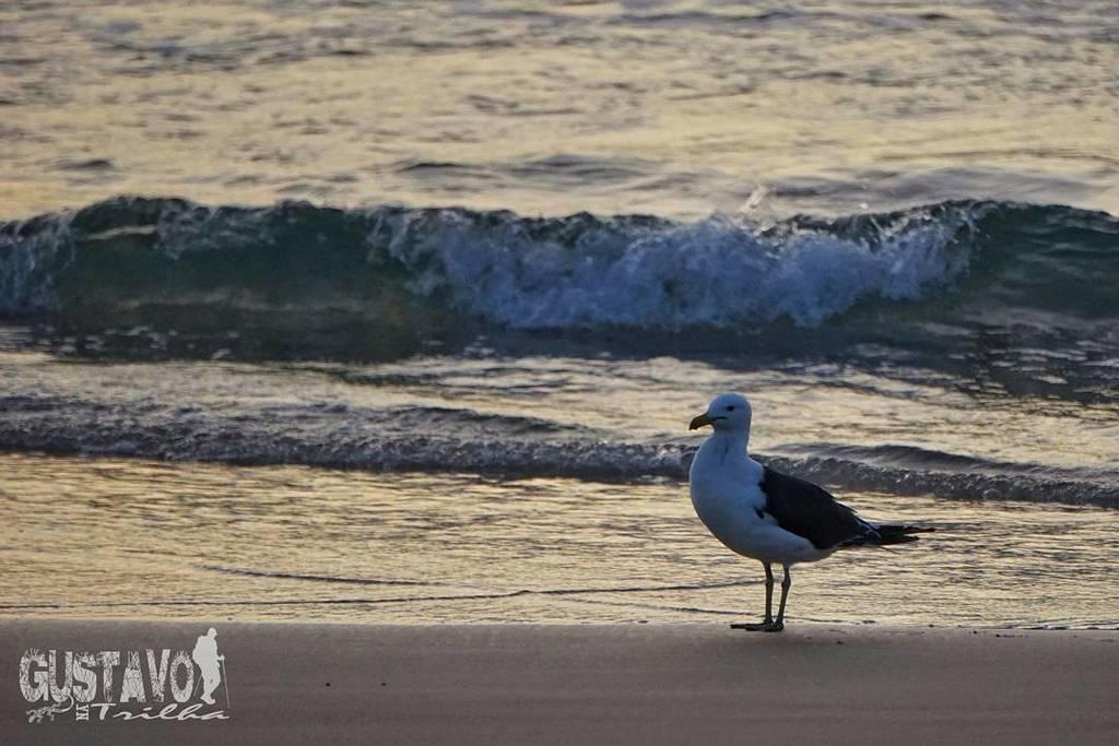 Na beira do mar... #gaivota #seagull #joaquina #lagoadaconceicao #beach #praia #wildlifepl…  http:// ift.tt/2nPv1eh  &nbsp;  <br>http://pic.twitter.com/rbVvhScoKU