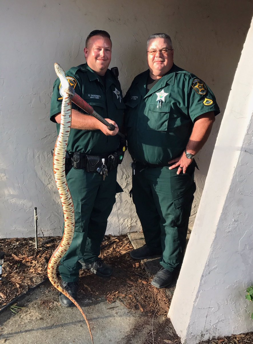 Inside Lake Wales house #CrazyIn4Words Deputies caught this snake 🐍 #w...