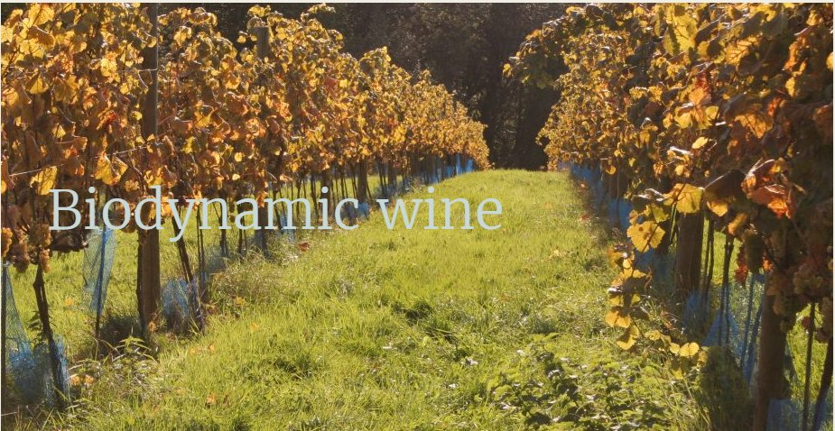 test Twitter Media - More and more of the world's best winemakers are converting to #biodynamic. Why? https://t.co/pld0sJWMUz https://t.co/h0hMJy1slt