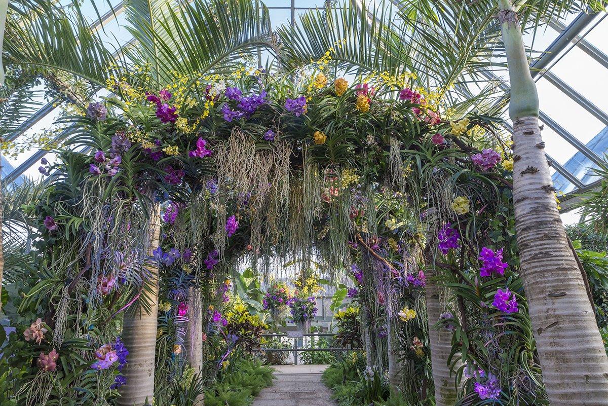 Orchid Show At Chicago Botanic Garden