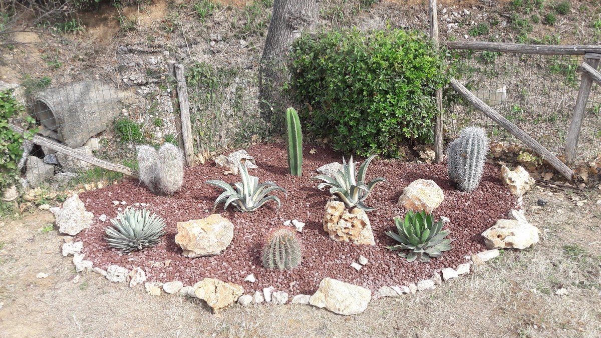 Aiuole con sassi e piante risultati immagini per aiuole for Piante grasse per aiuole
