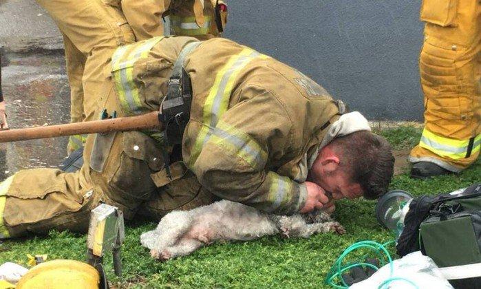 Bombeiro faz respiração boca a boca em cachorro depois de incêndio nos EUA. https://t.co/bYLRqf9dLH