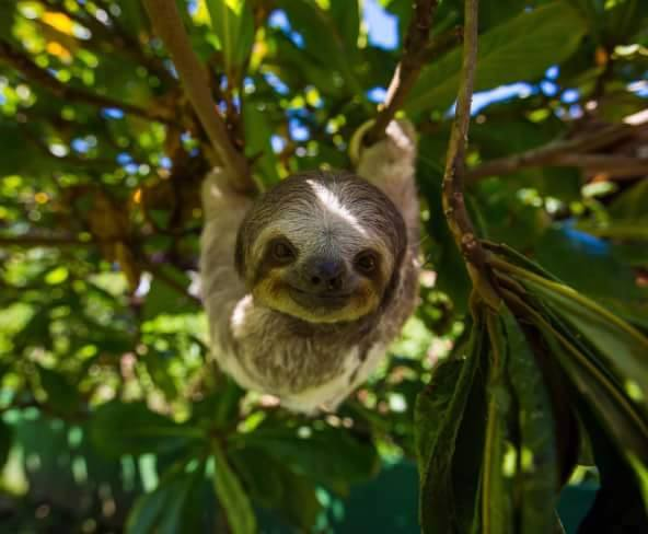 Image result for sloth head rotation