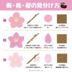 これからの季節には必須の知識?梅・桃・桜の見分け方がこれ!