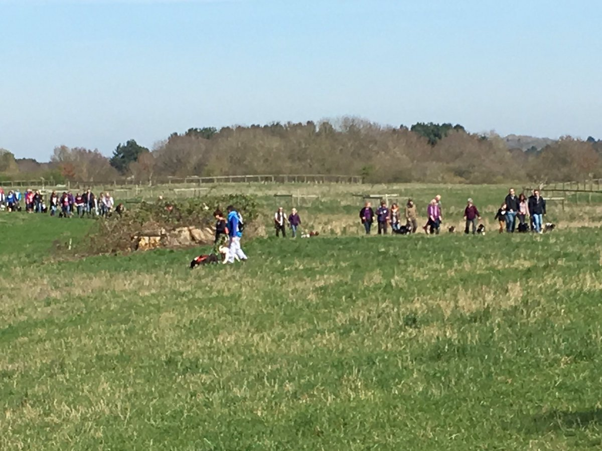 Lots of people and dogs this year @NTCroome #GBDW @HearingDogs