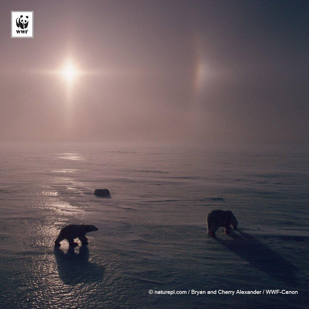 Les glaces de l&#39;#Arctique à niveau + bas historique. Contre les mauvais records, place aux records d&#39;action. Ce soir #EarthHour earthhour.fr<br>http://pic.twitter.com/NeH4x6lAiM