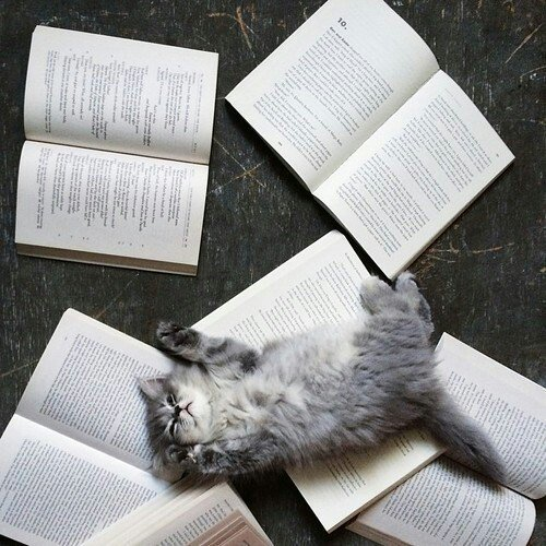 Happy #Caturday! What are you reading this weekend? https://t.co/vNxmM...