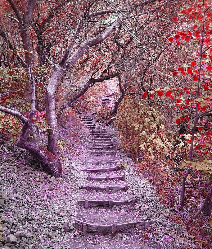 Stairs, #Forests and #Gardens of the #Earth<br>http://pic.twitter.com/rUP5LoCTzT