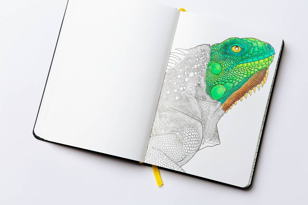 ColoringNotebook (@coloring_ntbk) | Twitter