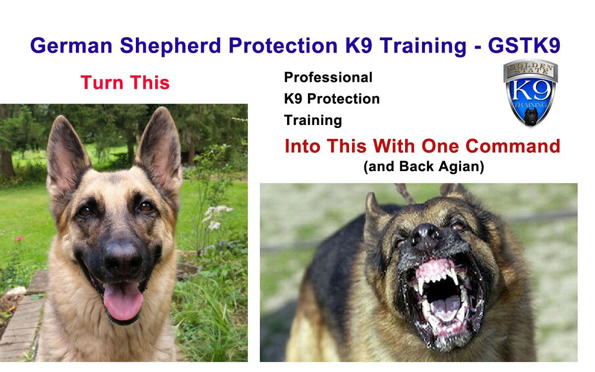 German Shepherd Protection K9 Training - Golden State K9  http:// gstk9.com/k9/tg70z  &nbsp;    #dogs #GermanShepherd #protection #family #homesecurity <br>http://pic.twitter.com/3OXCNrO3Rn