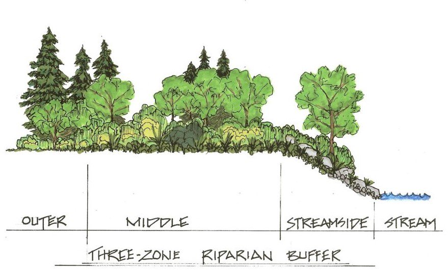"""What is a """"Riparian Buffer Zone"""" and Why is it Important? https://t.co/KOziDxEqMH https://t.co/G3Gcx4aq71"""