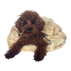 CARMEL BELLA COZY BED! Grab it:   #dogs #dogbed #dogsoftwitter #puppy @PoshPuppy