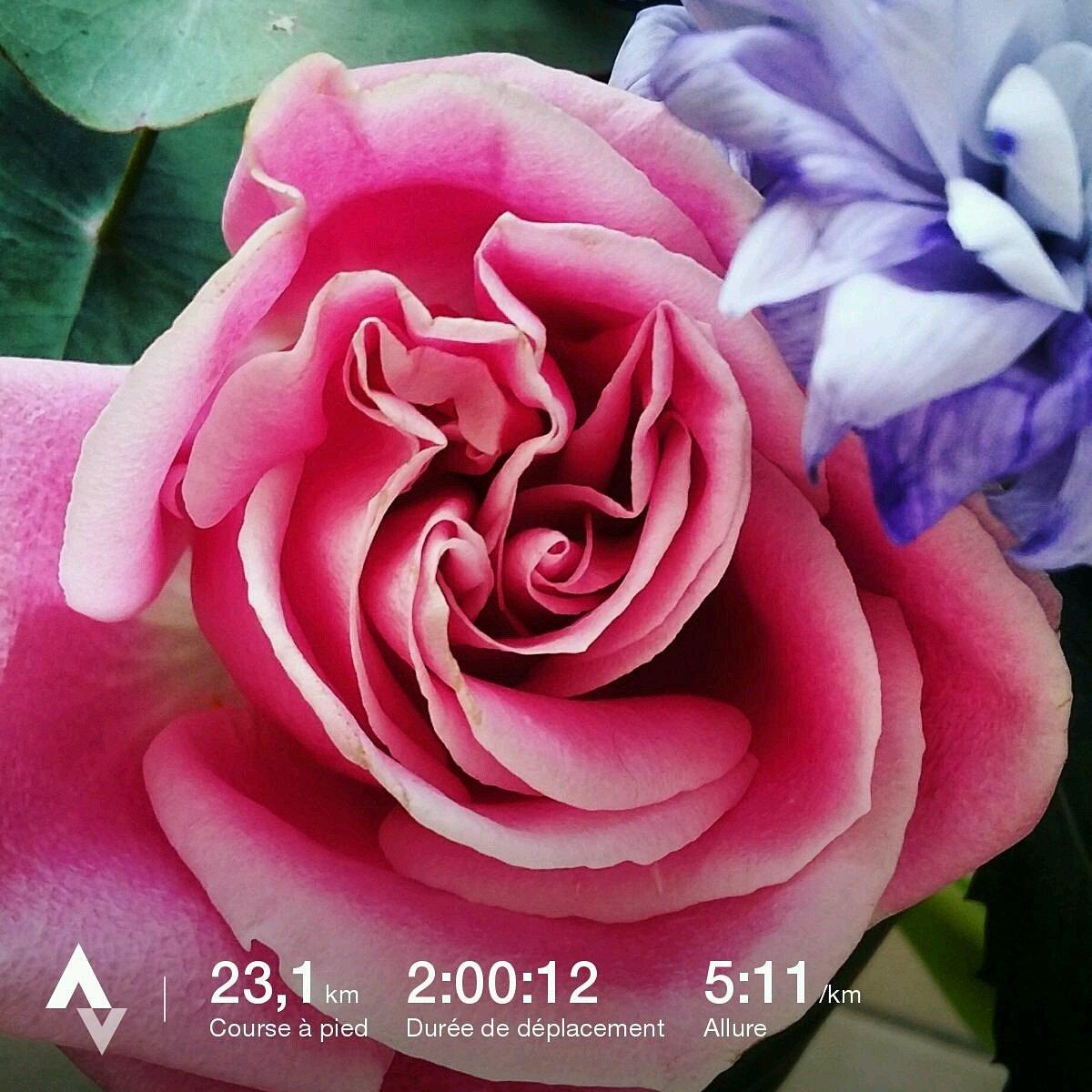 Deniers sortie longue avant le #marathon ! #whyirunbirhakeim #whyirunparis<br>http://pic.twitter.com/eTnuS5LVzk