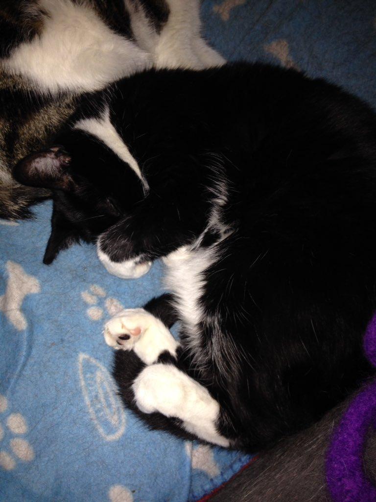 No pics Meowmy #pawparazzi #brightlights #pawbeans<br>http://pic.twitter.com/sM9JBMUfMc