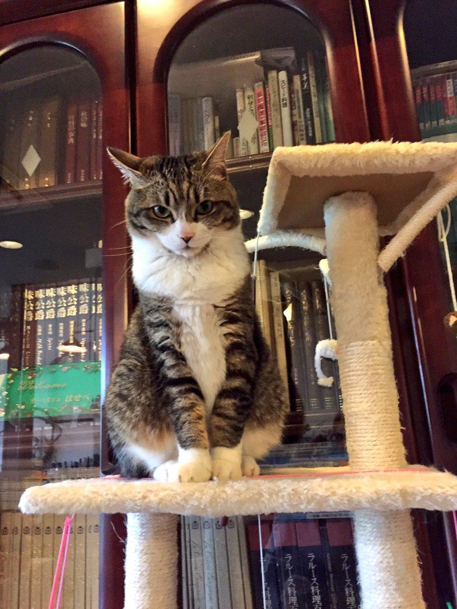 ねこ〜(´・_・`)伊豆にあるネコ好きのネコ好きによるネコ好きの為の宿オーベルジュはせべ!ネコと戯れながら食事、宿泊できる!寝てると猫が添い寝にくる時も!!屋内に7匹!外に10匹も元気にネコが暮らしている!元フレンチ出身の方が経営してるのて料理が当然美味しい!幸せだった〜! pic.twitter.com/T7jzrgxixX