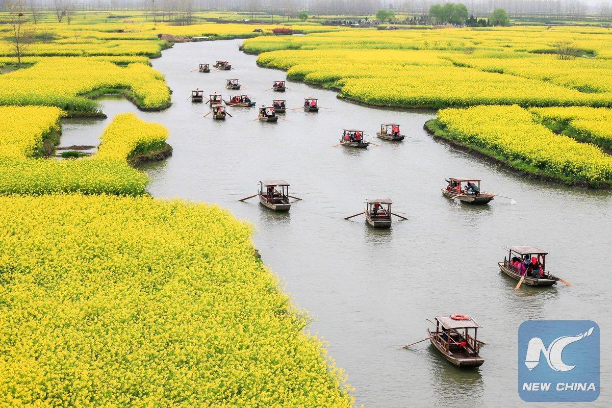 xinhua china anhui laian pond cypress scenery scenery - HD1200×800