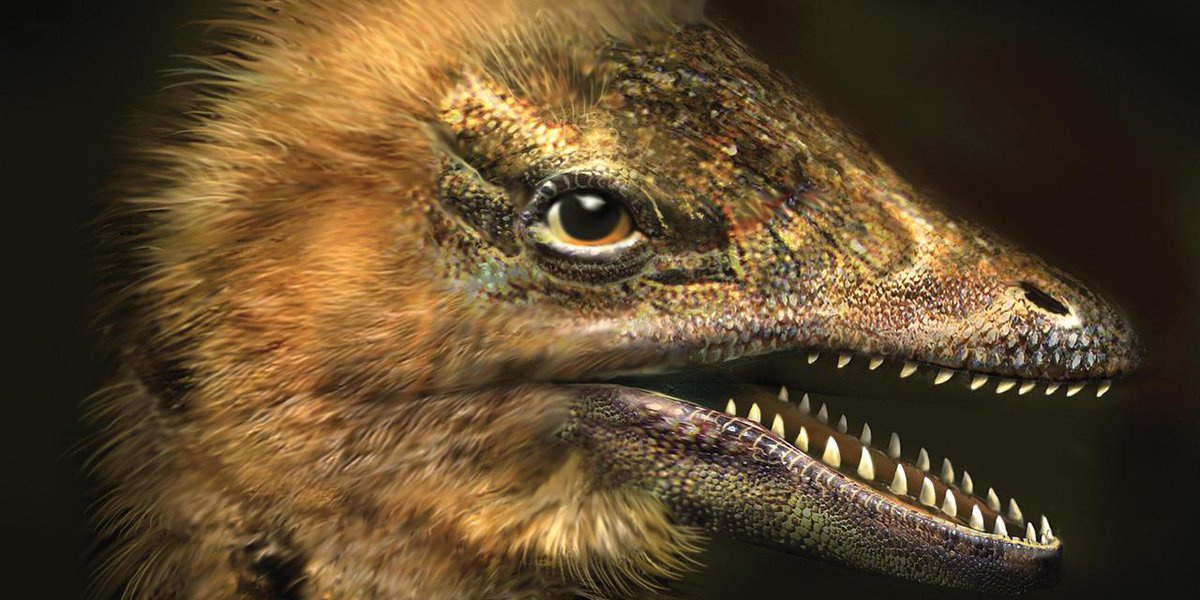 Scientists accidentally grew a chicken with the face of a dinosaur https://t.co/bkWWFn6jti