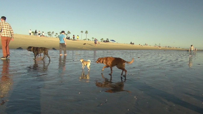 Retweet if you think there should be more #dog #beach&#39;s!   Watch our 1st beach visit @  https://www. youtube.com/watch?v=2AijiO gPMiw &nbsp; …   #dogs #puppy #travel #water <br>http://pic.twitter.com/xDHyPCsJVG