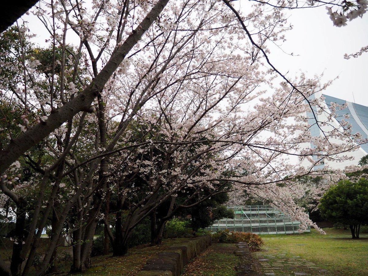 「お台場 潮風公園 桜」の画像検索結果