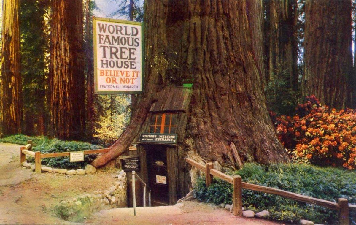 "Famous Tree Houses cory doctorow on twitter: ""world famous tree house, tree house"
