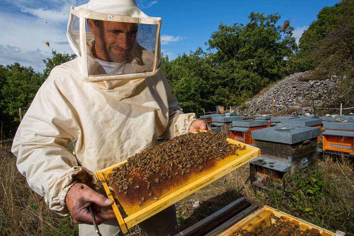 Image result for Beekeepers