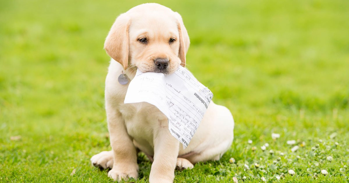 Get your paws on all the latest Hearing Dogs news by signing up to our enewsletter! >>
