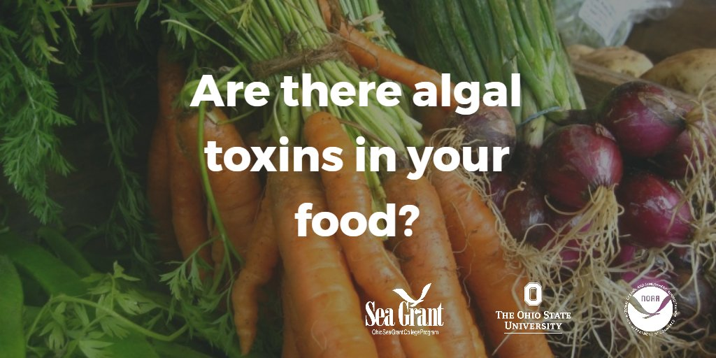 Are there algal toxins in your food? @OhioState researchers are investigating. https://t.co/r1rqgVIeJa https://t.co/djsHqbXGPe