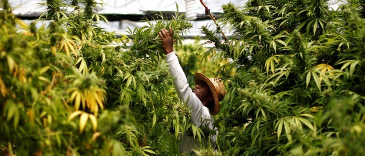 Lawmakers Bet Economy On Legal Weed https://t.co/KeKMxowW5p #Marijuana...