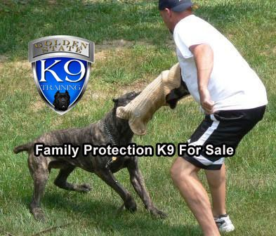 Family Protection K9 for Sale - Golden State K9 Training  http:// gstk9.com/k9/vxtj3  &nbsp;   #Dogs #dogtraining #Protection #safety #dogs #HomeSecurity <br>http://pic.twitter.com/K3DOo4H2Od