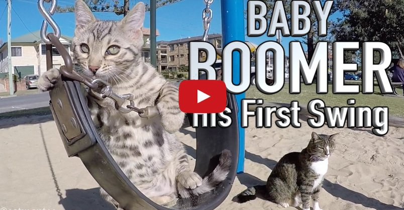 Baby Boomer and His First Swing CLICK to watch >