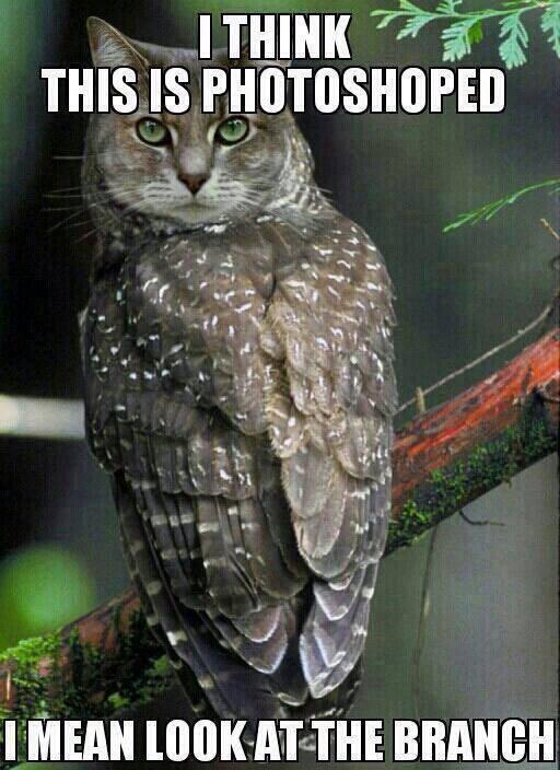 Owl or pussycat?