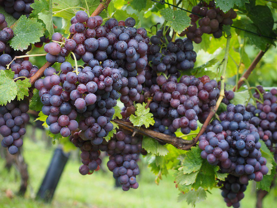 Too busy for #healthy eating? Get all the #nutrition of fresh berries &amp; grapes EVERY day:  http:// hlty.us/B7h  &nbsp;  <br>http://pic.twitter.com/awPkP8jWzb