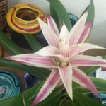 It's a terrific Tuesday in #dtlv! #bromeliads #plantsarecool https://t.co/LZYu4HUFGH