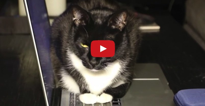 #Cats and Computers  CLICK to see hilarious compilation >
