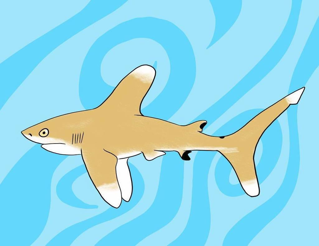 Save The Oceanic Whitetip Shark #sharkconservation #savesharks #oceanicwhitetip #whitetipshark #illustration #draw… http://ift.tt/2ovYt5D pic.twitter.com/Y10oyZ2D1C