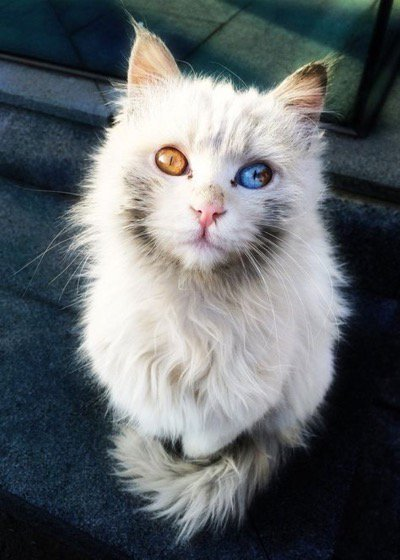 What an amazing looking #cat