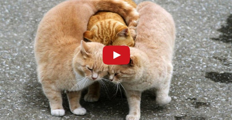 Top 10 Reasons Why You Should Get a #Cat   CLICK to find out >
