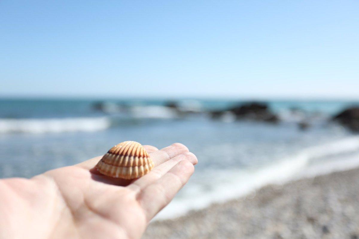 Resultat d'imatges de buscar petxines a la platja